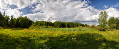 Summer panorama Royalty Free Stock Photo