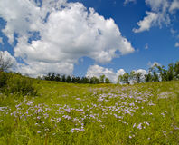 Summer panorama a blossoming meadow Royalty Free Stock Images