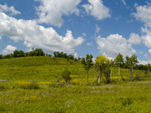 Summer panorama a blossoming meadow Stock Images