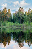 Summer panorama of the forest with a lake, Stock Photo