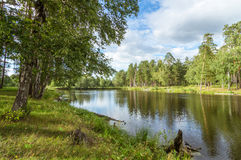 Summer panorama of the forest with a lake, Royalty Free Stock Images