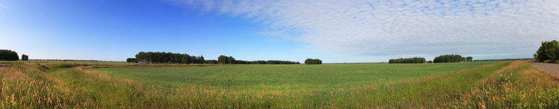 Summer panorama of green field and blue sky. Royalty Free Stock Photography
