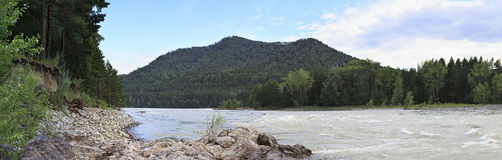 Summer panorama of mountain river Katun. Stock Photography
