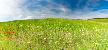Beautiful summer landscape panorama, meadow and flowers and blue sky Stock Photography