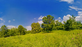 Summer panoramic shot of forest and meadow. Bright high resolution panoramic shot of a summer meadow and edge of forest royalty free stock photography
