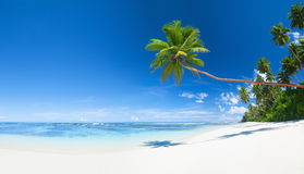 Summer Paradise Beach with Clear Sky Royalty Free Stock Photography