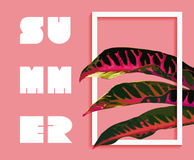 Summer paradise design of tropical jungle plant Stock Image
