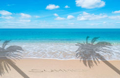 Summer at paradise with palm Royalty Free Stock Images