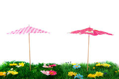 Summer parasols Royalty Free Stock Image