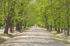 Summer park alley. Beautiful park alley under green summer trees royalty free stock image