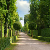Summer park with a beautiful avenue Royalty Free Stock Photography