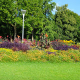 Summer park with beautiful flowerbeds Stock Photography