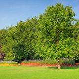 Summer park with beautiful flowerbeds Royalty Free Stock Image