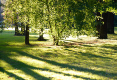 Summer park by day. Royalty Free Stock Photos
