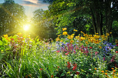 Summer park with a  flower bed Stock Photography