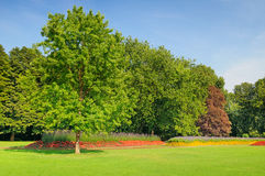 Summer park with flowerbeds Royalty Free Stock Photography