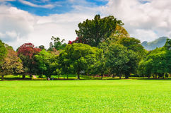 Summer park with green lawn and blue  sky. Stock Photography