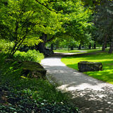 Summer park with  green lawns Stock Photos