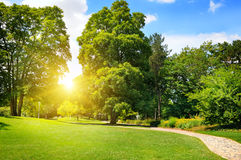 Summer park with green lawns Stock Images