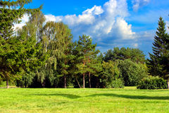 Summer Park Landscape Royalty Free Stock Photos