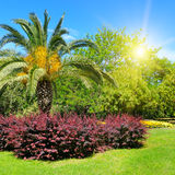 Summer park with  palm trees, flower beds and lawns. Royalty Free Stock Photos