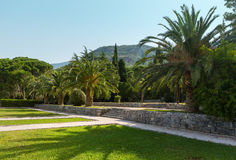 Summer park with palm trees (Montenegro) Stock Photography