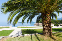 Summer park with palm trees (Montenegro) Royalty Free Stock Photos