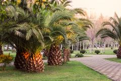 Park with path and palm trees Stock Images