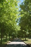 Summer Park Road Green Trees Walk Relax Healthy Sport Time. Ummer Park Road Green Trees Walk Relax Healthy Sport Time Concept royalty free stock images