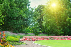 Summer park. Sunrise in beautiful summer park royalty free stock images