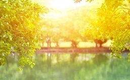 Summer park, Sunshine on the trees and water lake in the park, V Royalty Free Stock Photos