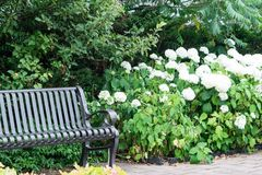 Summer park visit with seating bench stock photos