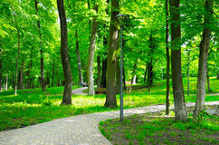 Summer park with walking paths Stock Photos