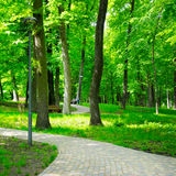 Summer park with walking paths Royalty Free Stock Images