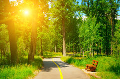 Summer park and  walking paths Royalty Free Stock Photo