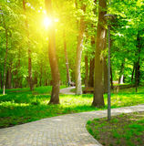 Summer park with walking paths Stock Photography