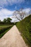 Summer park walkway Stock Images