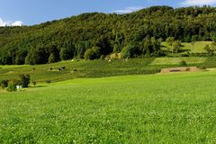 Summer pastoral landscape in Switzerland. With hills, pasture, and forest Stock Images