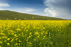 Summer pastoral scenery. A group of rural landscapes in Gansu Province, china Royalty Free Stock Photos