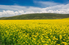 Summer pastoral scenery. A group of rural landscapes in Gansu Province, china Stock Images