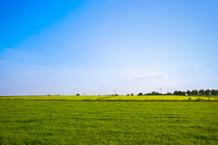 Free Summer Pasture Royalty Free Stock Photo - 8275495