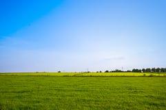 Summer pasture Royalty Free Stock Photo