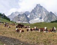 Summer pasture Stock Photo