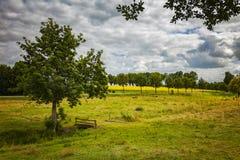 Free Summer Pasture Lands Stock Photo - 71629080