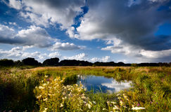 Summer pasture with wild pond Royalty Free Stock Photos