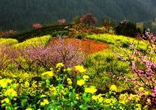 Summer pasture in Xinjiang Stock Image