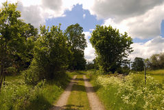 Summer path Royalty Free Stock Images