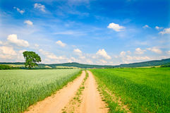 Summer path field. Summer path in field, rural countryside, background Stock Images