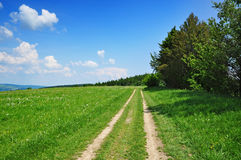 Summer path nature Stock Image