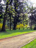 Summer path in the park, surrounded by trees stock photo
